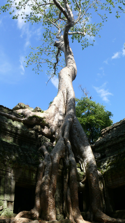ta_prohm_temple.jpg